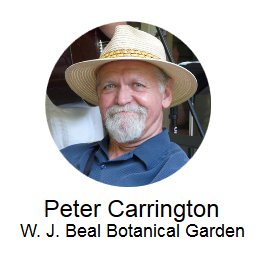 Peter Carrington, W.J. Beal Botanical Garden
